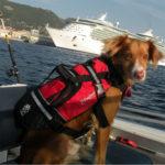 Crewsaver Petfloat In Boat